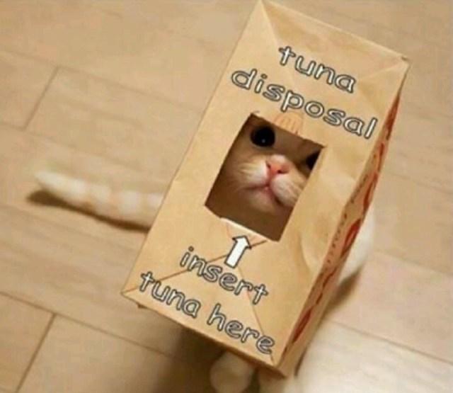 Cats Get Addicted To Tuna