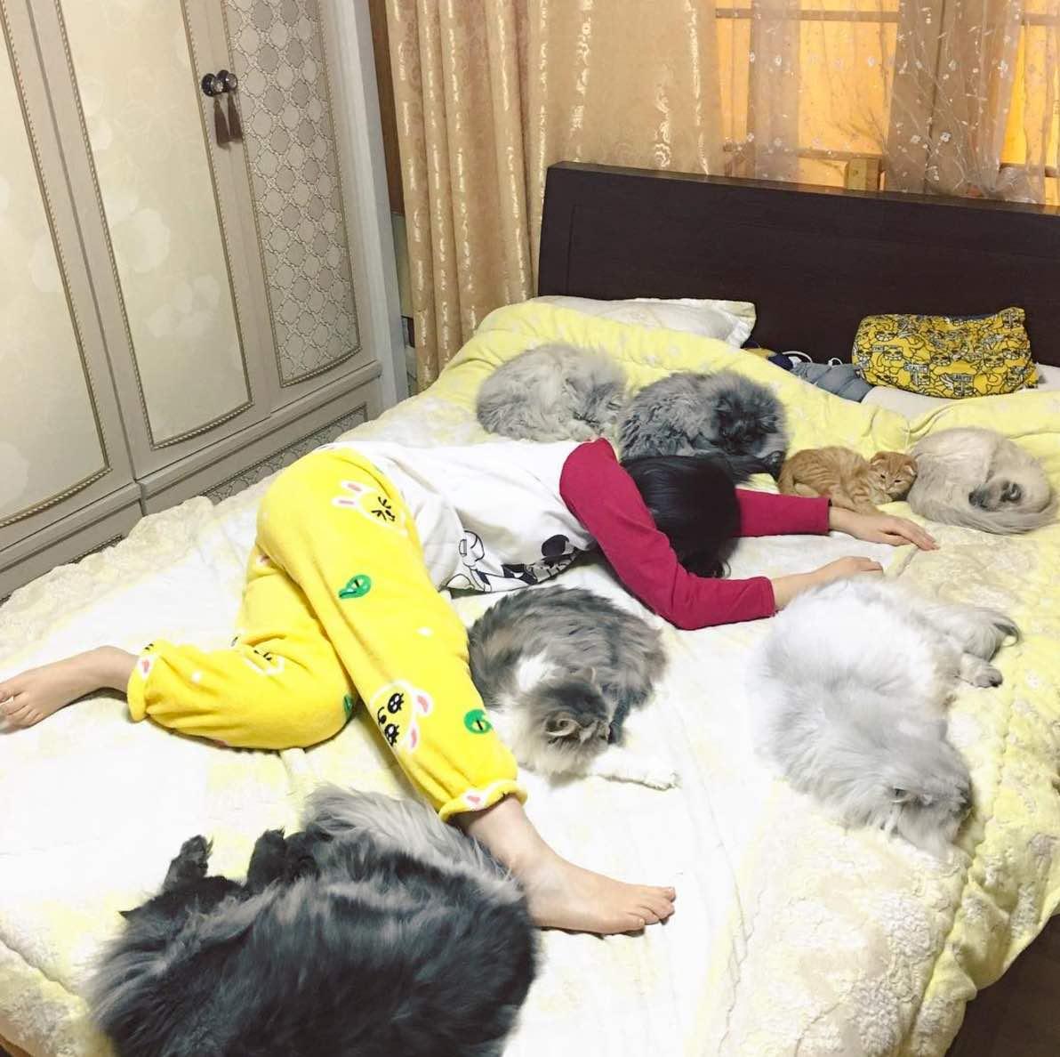 Fullsize Of Dog Wants A Kitty