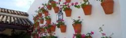 cordoba flowers
