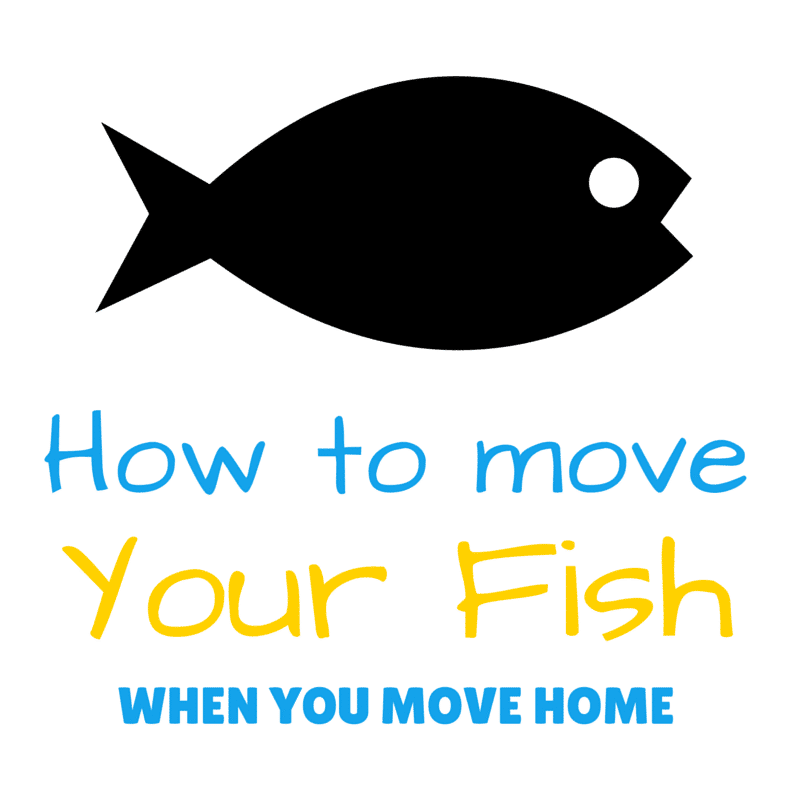 How to Move Fish when you Move Home