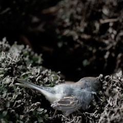 dead bluebird