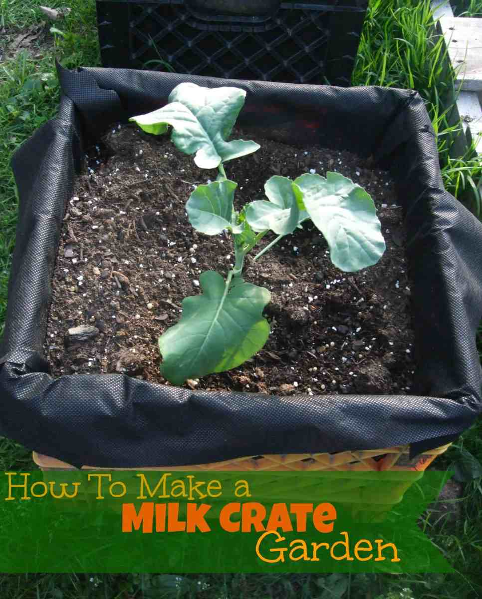 How to Make a Milk Crate Garden