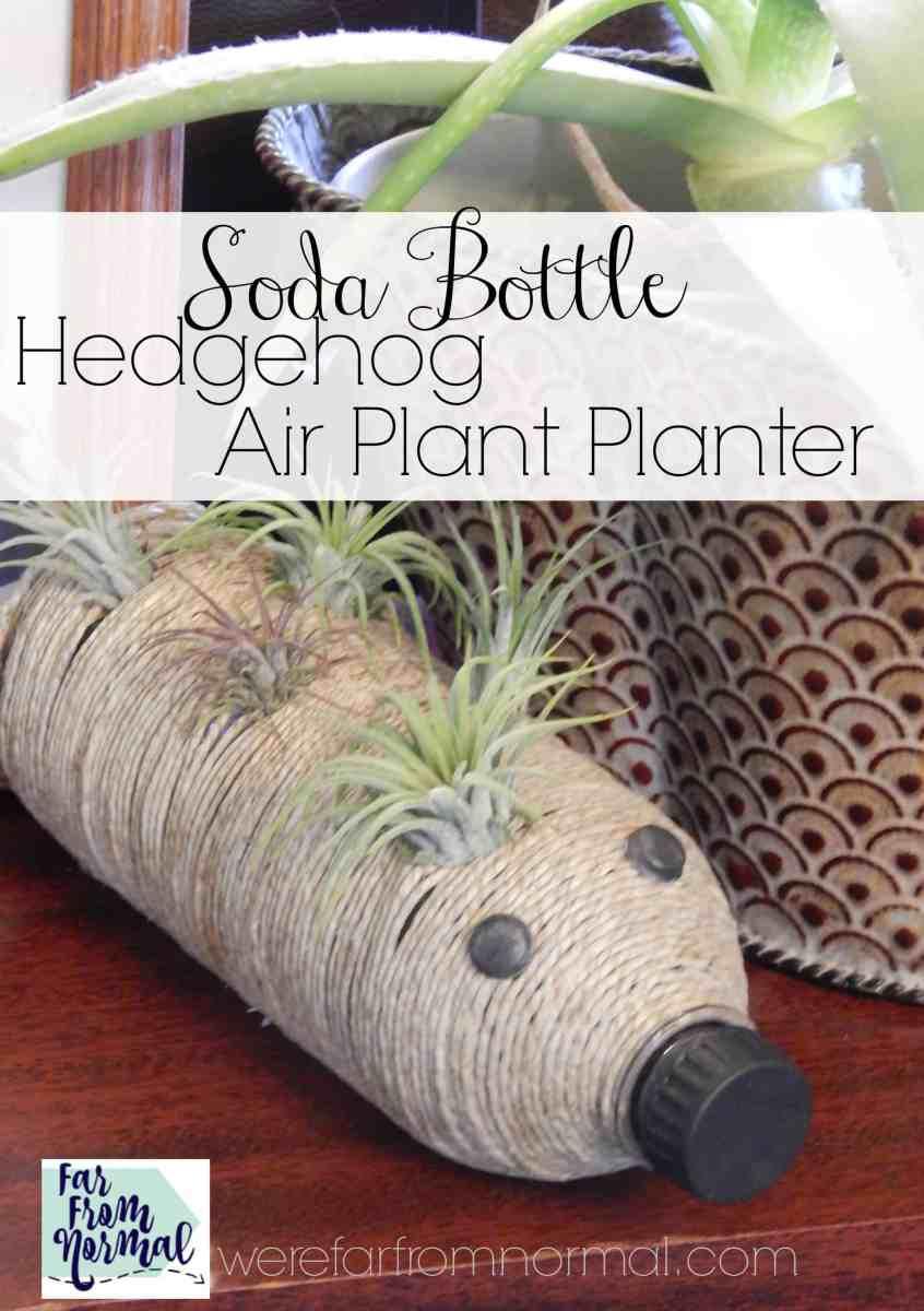 Soda Bottle Hedgehog Air Plant Planter