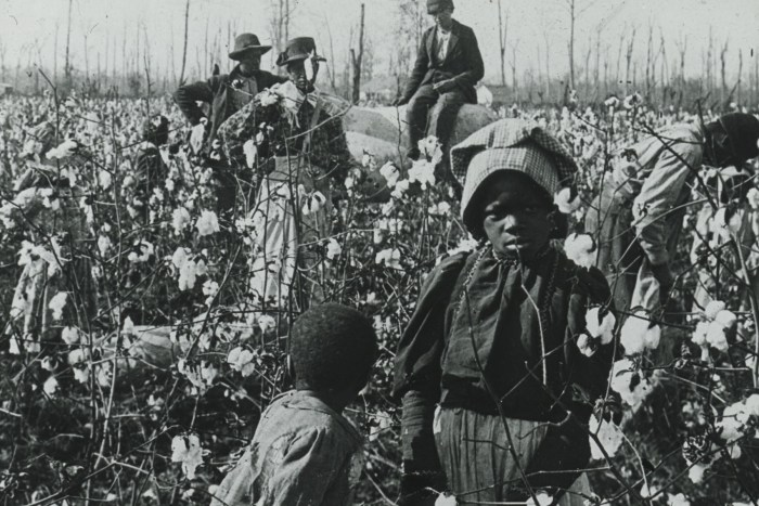 Picking Cotton on a Mississippi Plantation