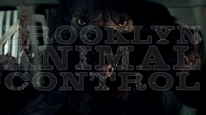 brooklyn-animal-control-banner
