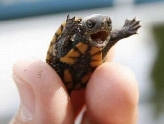happy-baby-turtle-is-happy-big