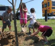 Children use shovels and hands to fill in around the tulip poplar tree they helped plant at Bloomfield Memorial Park.