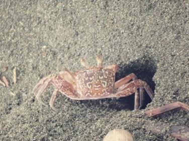QR-Code Krabben besuchten uns beim Warten