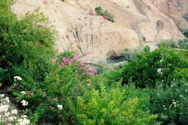 Grüne Oase von Ma'In, Jordanien