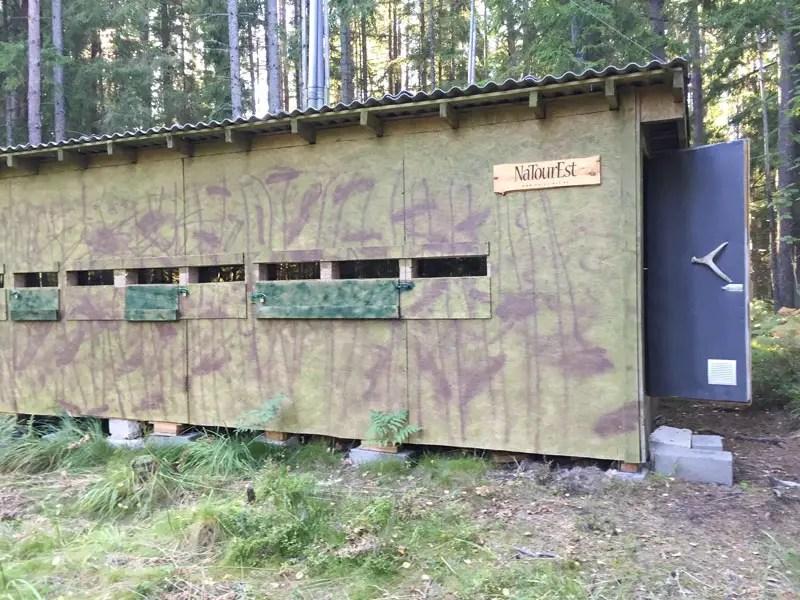 bärenbeobachtung estland alutaguse