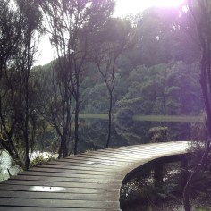 Boardwalk on Lake Wilkie the Catlins