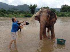 Justin Butler Washing Elephants