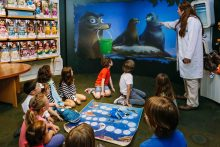 Finding Dory comes to Disney Store this July