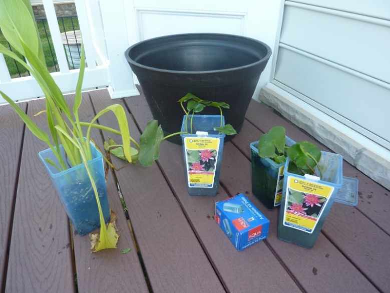 container water garden tutorial, diy container water garden