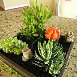 DIY succulent planter, succulent planter tutorial