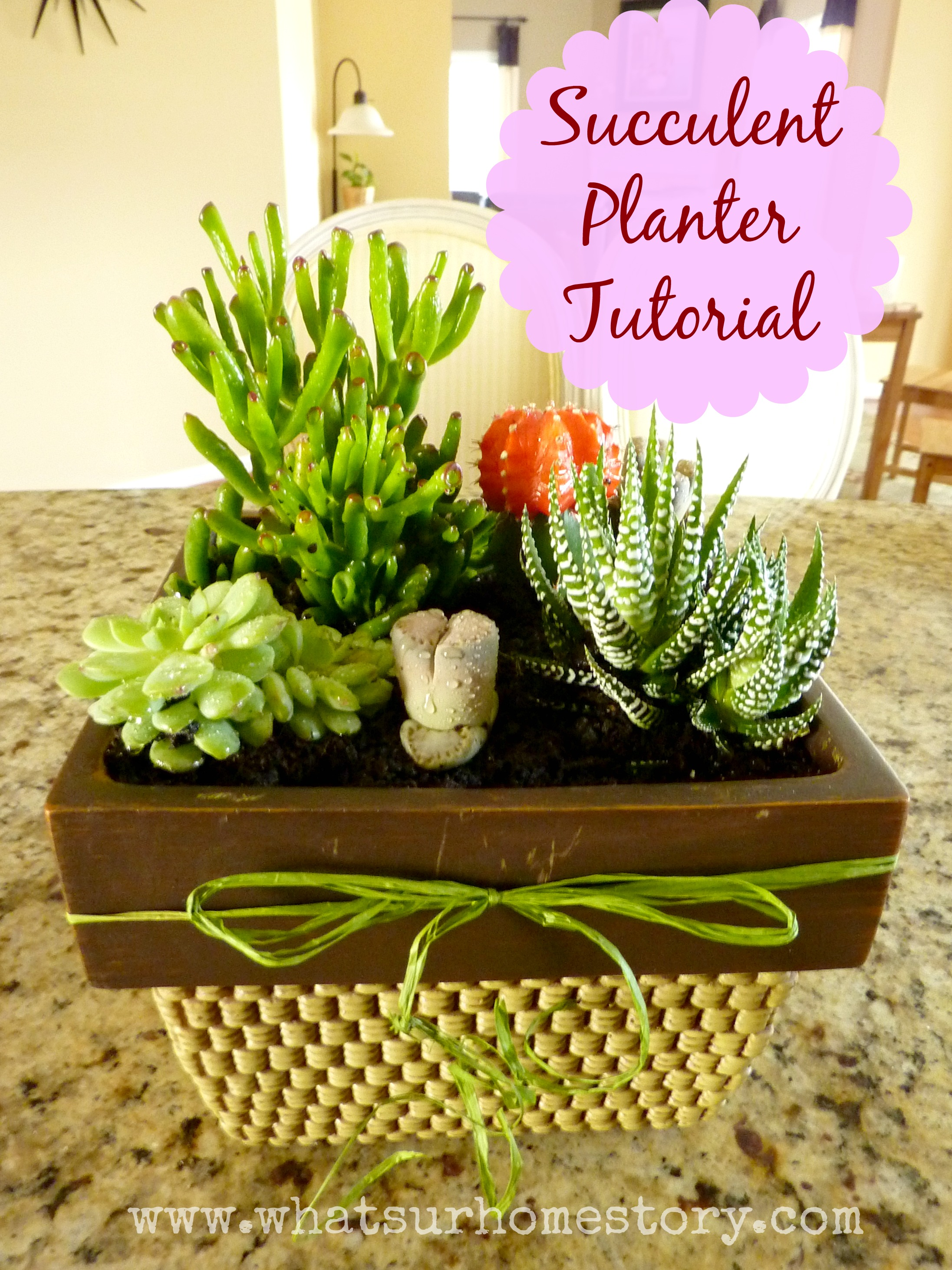 How to Make a Simple Succulent Planter