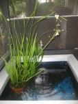 DIY Porch water garden