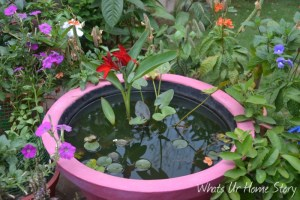 Whats Ur Home Story: Container Water garden, Porch water garden
