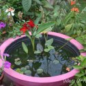 Tropical Container Water garden, Porch water garden