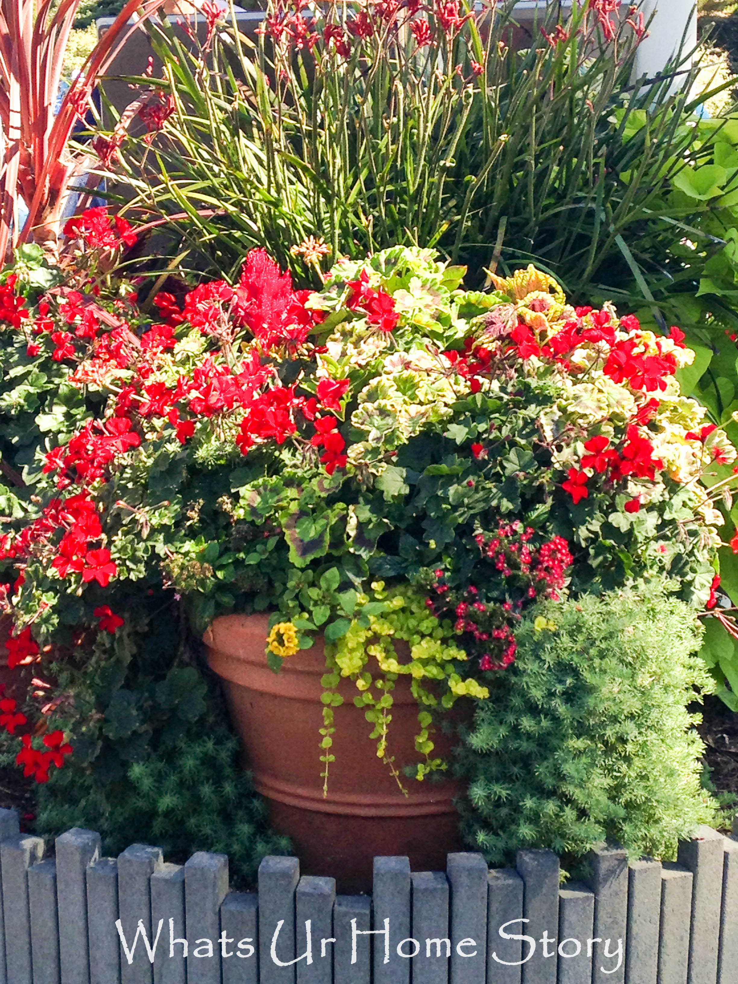 Container gardening whats ur home story for Plants for outdoor garden