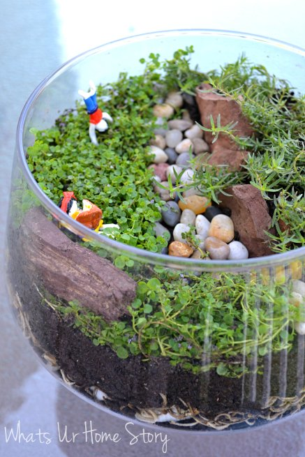 DIY Terrarium, Open jar terrarium, terrarium with clay figurines,How to make a terrarium, air dry clay figurines, corsican mint, Orange scented Thyme
