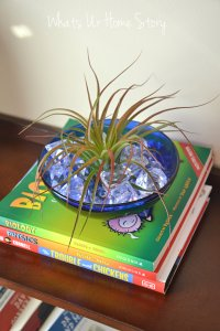 decorating with air plants, Tillandsia, air plant terrarium