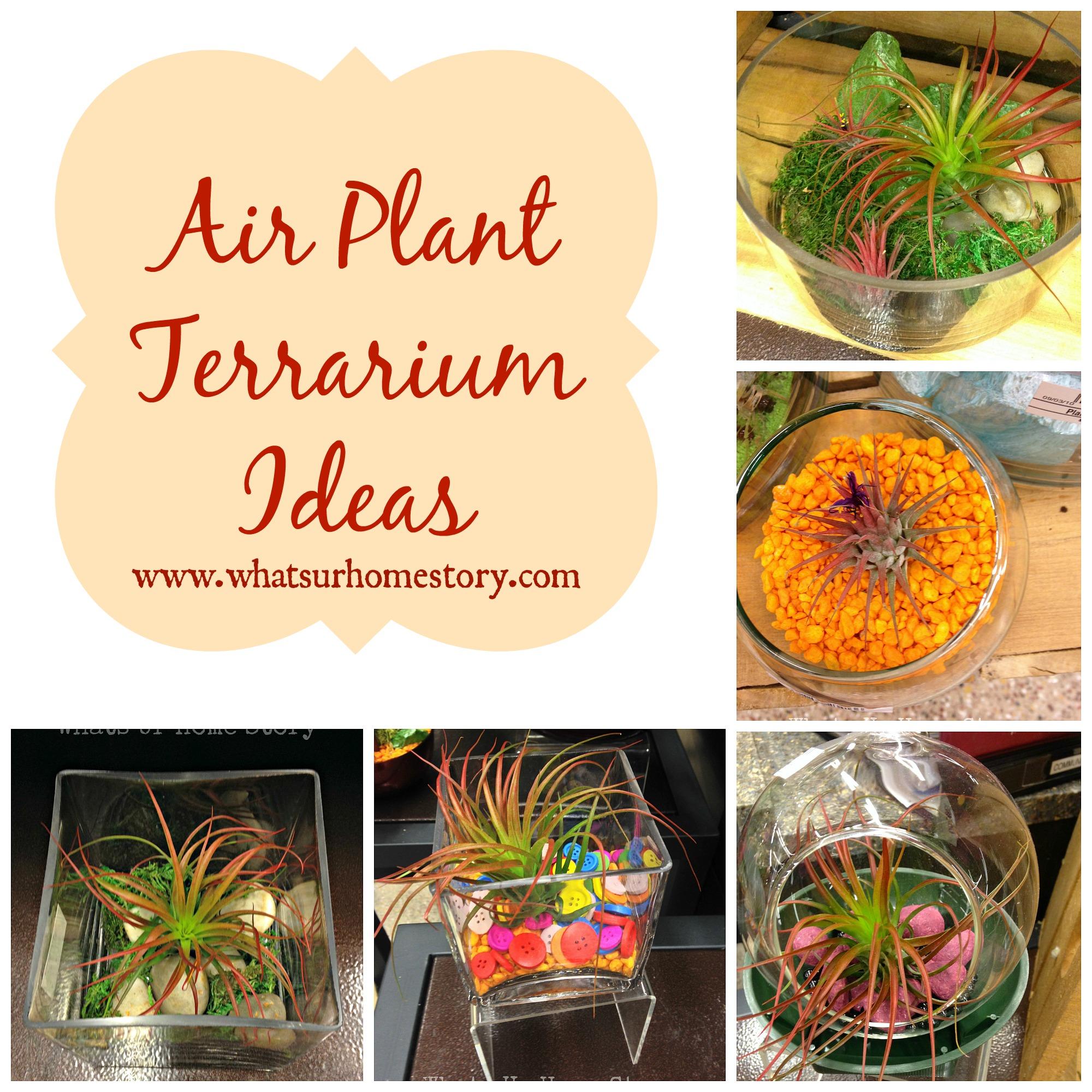 Air Plant Terrarium Ideas Whats Ur Home Story