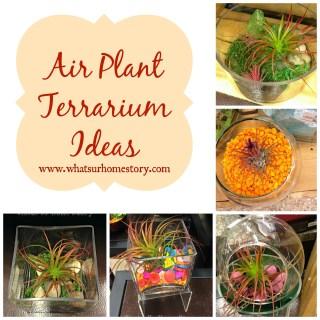 Air plant terrarium ideas