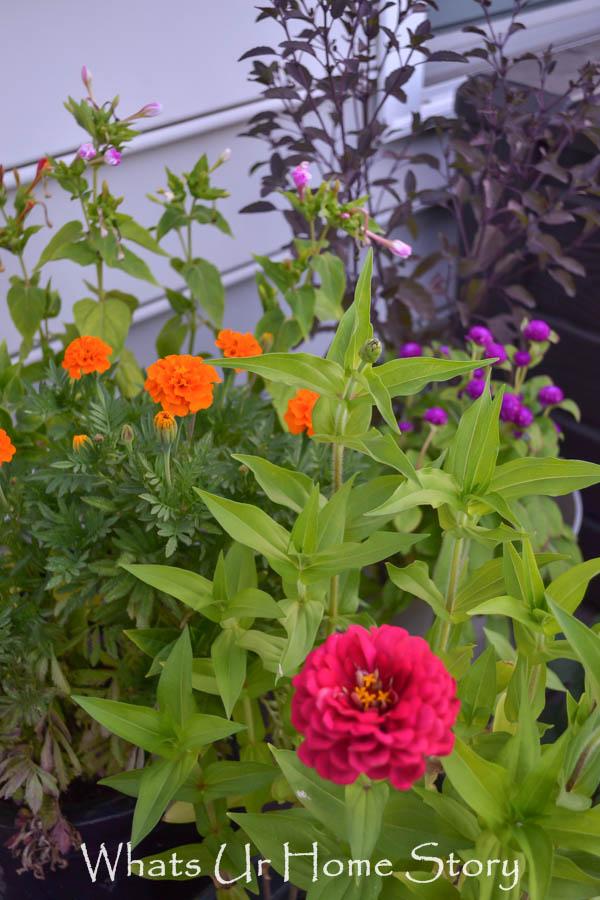 summer garden-0237