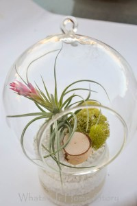 hanging air plant terrarium tutorial