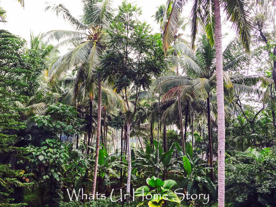 kerala-palm trees