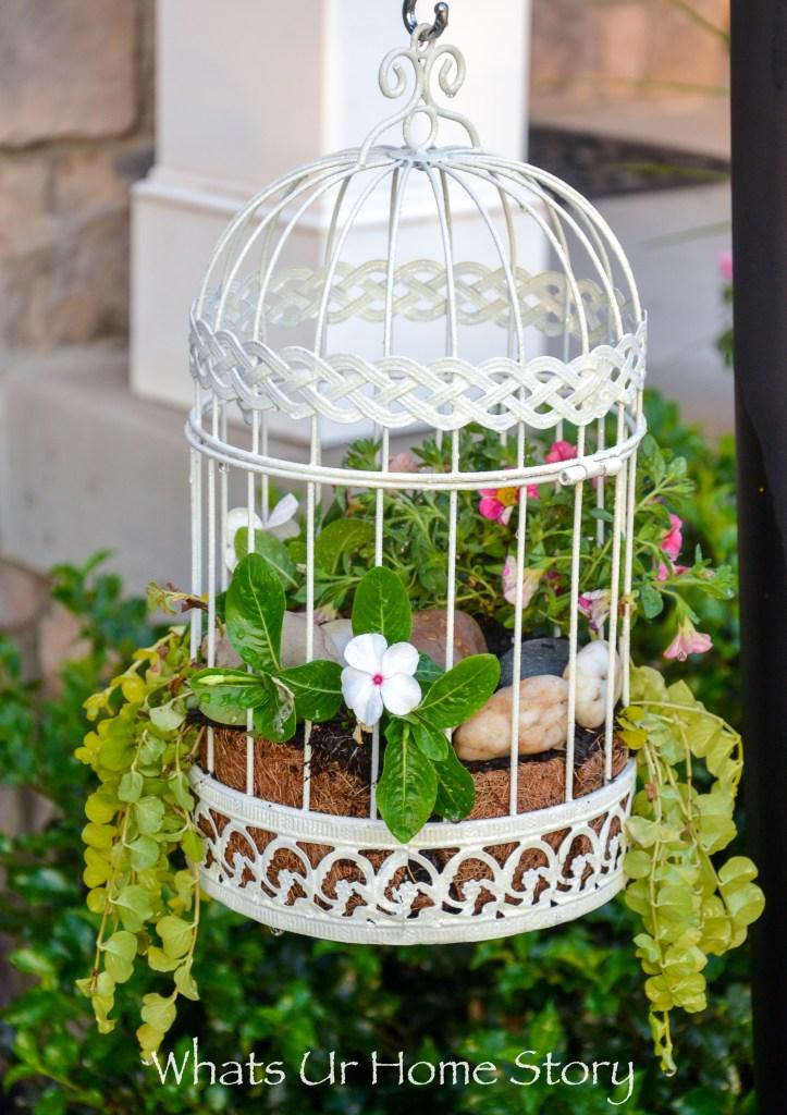 container garden ideas-annuals in a bird cage