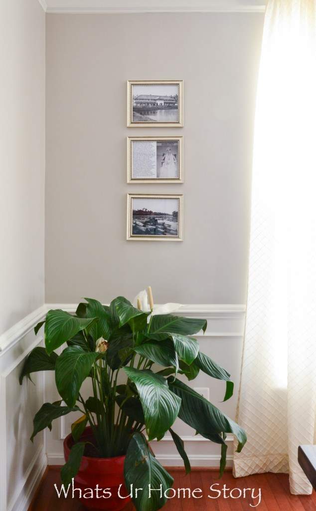 Large Peace Lily plant in a transitional dining room with black and white photos as wall art and Benjamin Moore Revere Pewter wall color