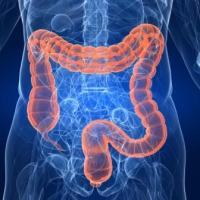 10 Interesting Facts About Intestines