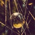 Illum Forest Daytime5-1
