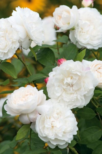 At Home with Kate: Planting a Duchess-Worthy Country Garden