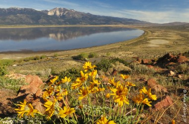 Wildflowers and Washoe Lake