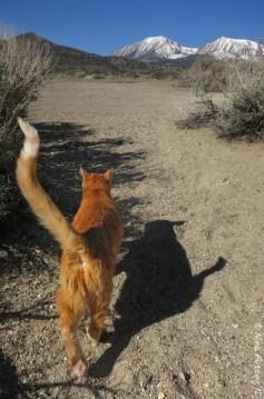 Sierra Kitty
