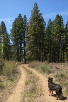 The Williamson River Trail