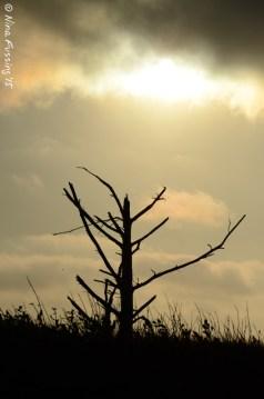 Hazy sunset on the dune grass