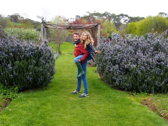 lavender farms