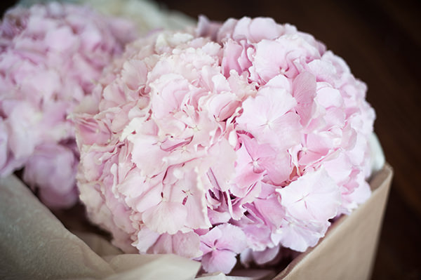 Hydrange Bouquets Pink & Blue Seaside Wedding http://www.samwilliamsonphoto.co.uk/