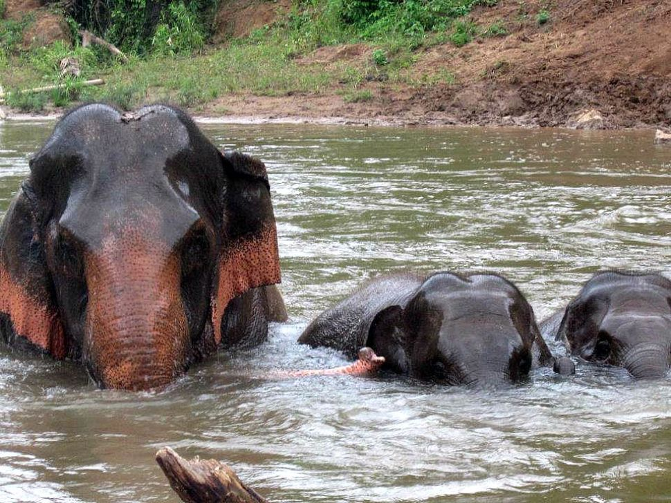 part of the elephant family bathing in the river at ENP