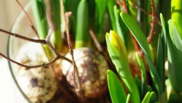 Spring inside © Whiteboxliving