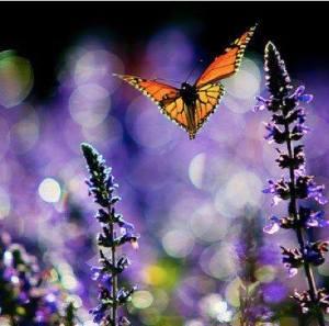 flowerswithbutterfly