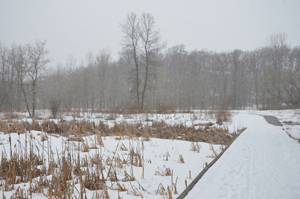 A snow-covered trail at Baird Creek in Green Bay.