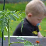 Expert Advice for Growing a Backyard Vegetable Garden in Northeast Wisconsin
