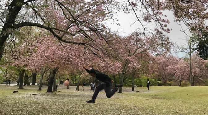 Sebelum lompat ni maybe ada 5 ekor rusa.  Rusa busuk macam kambing. Kalau makan mesti sedap.  #Kyoto #Nara #Japan #SushinaimiTrip