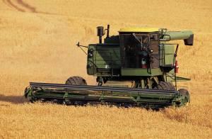 Wheat combine on farm