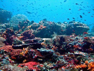 healthy reef life in clear waters off nusa lembongan